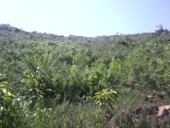 Kibos Land for sale next to Tido school