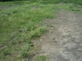0.29ha land for sale Nyamasaria-Molem area