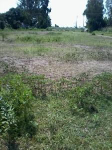 land for sale molem