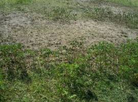 One Acre Nyamasaria land for sale