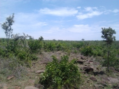 chiga land for sale