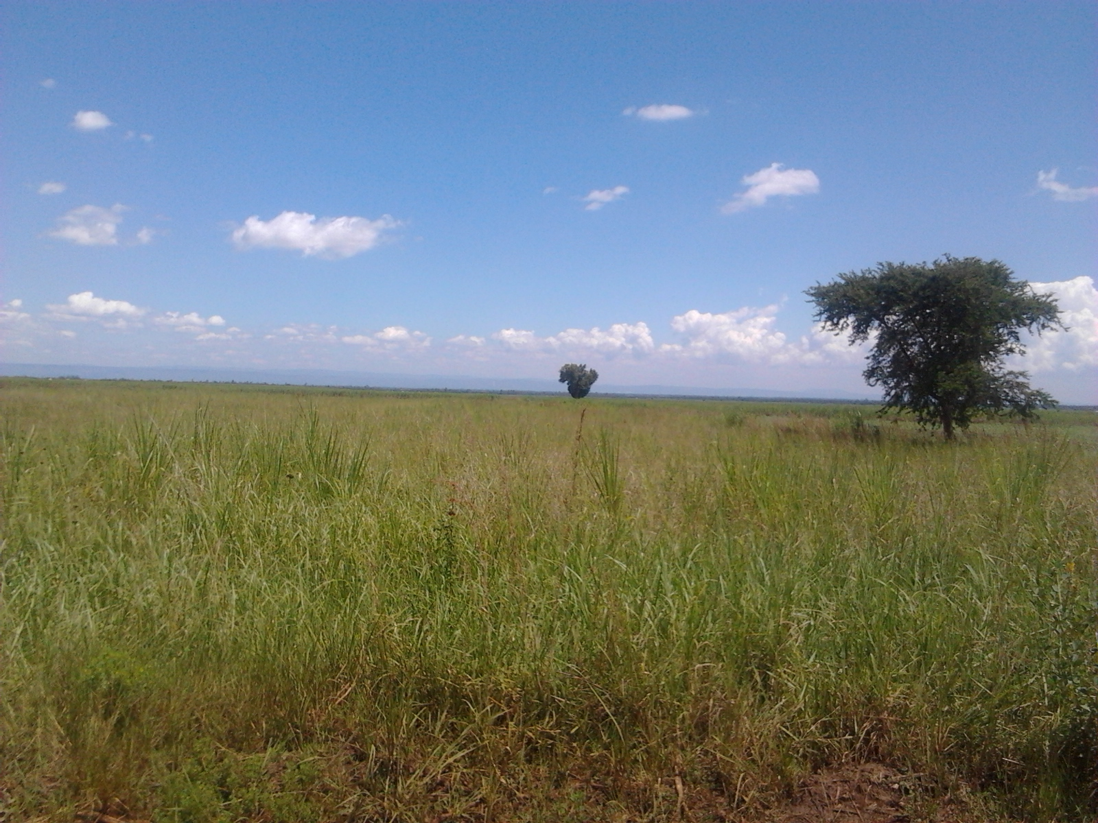ruiru land for sale