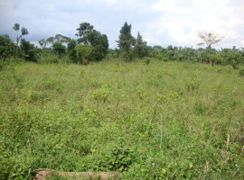 Mamboleo land for sale