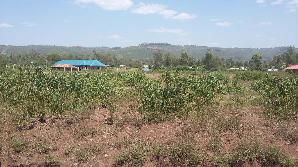0.02ha land for sale in kogony near airport