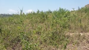 land for sale kakamega