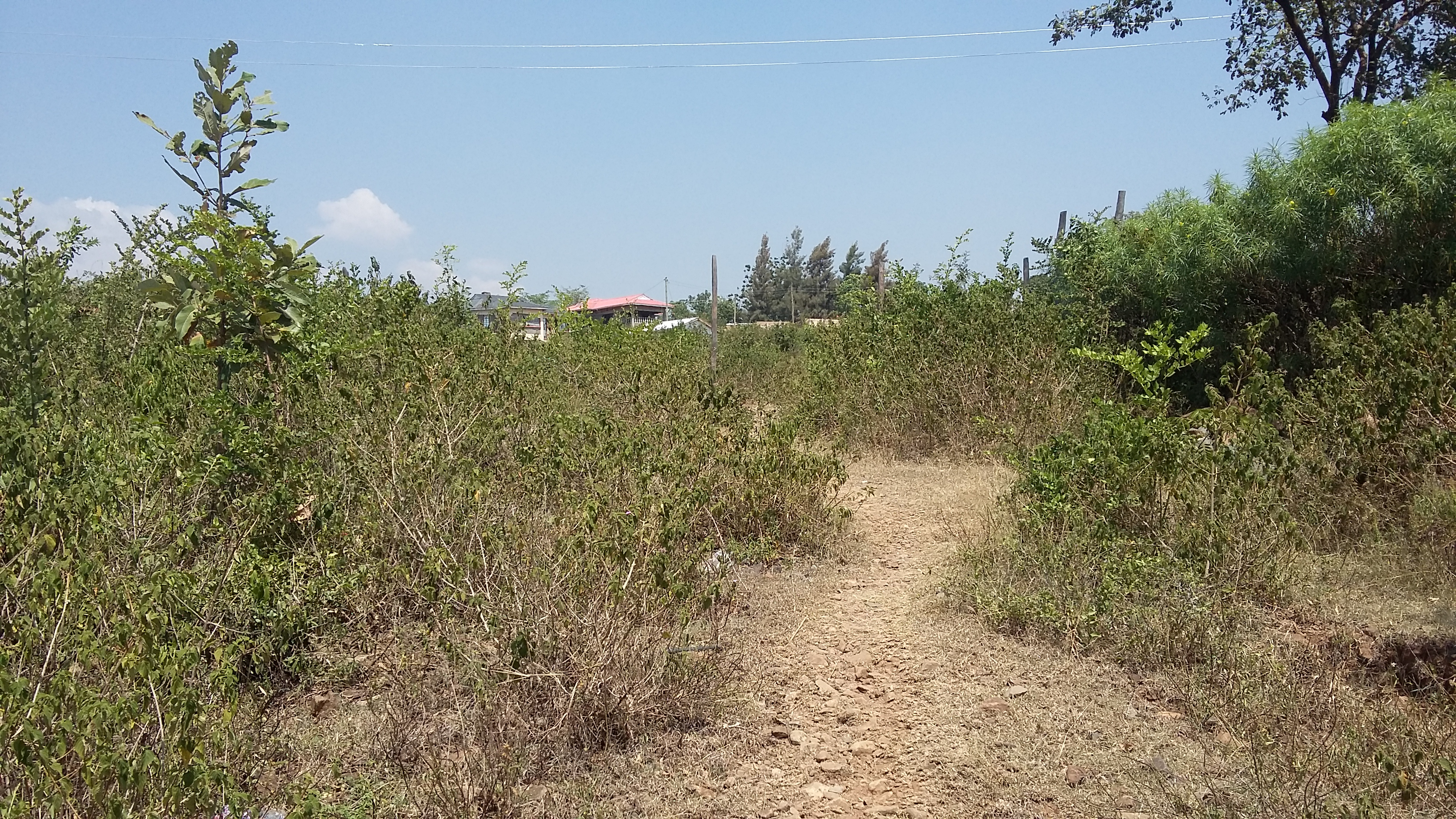 siaya land for sale