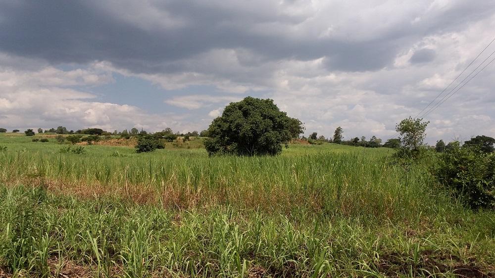 Tamu land for sale