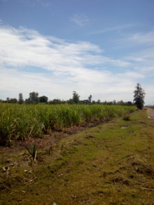 land for sale awasi