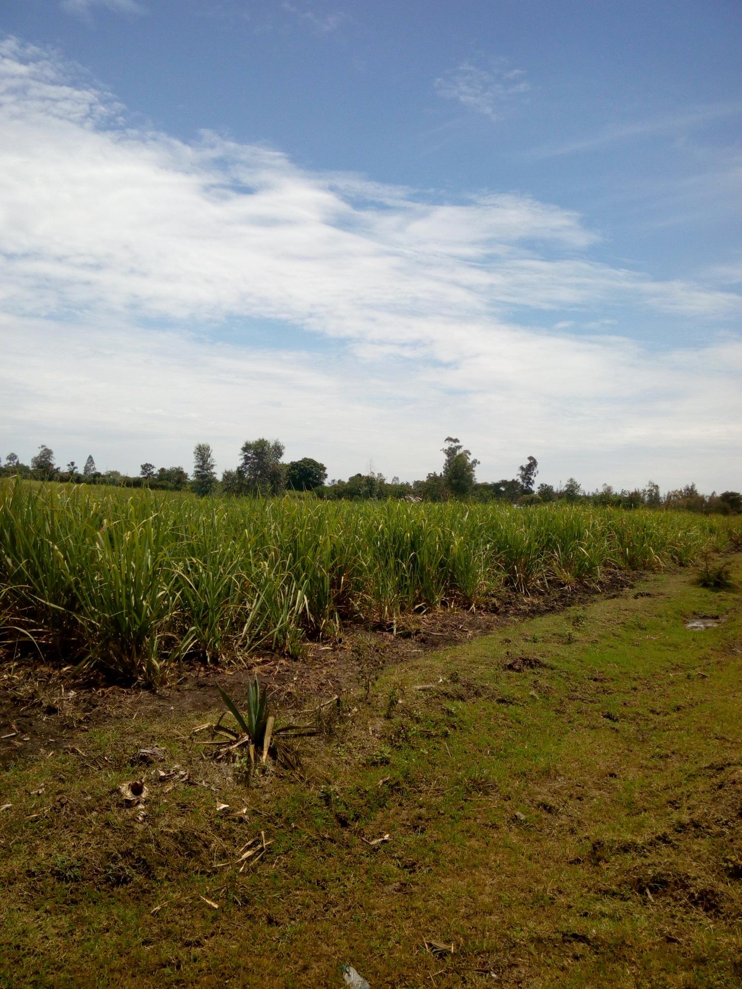 awasi land for sale