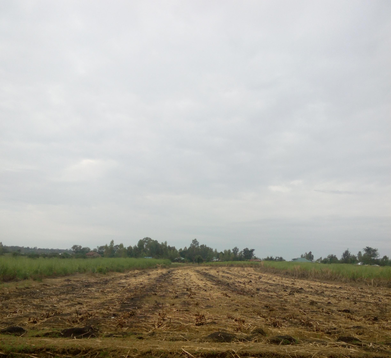 land in Awasi