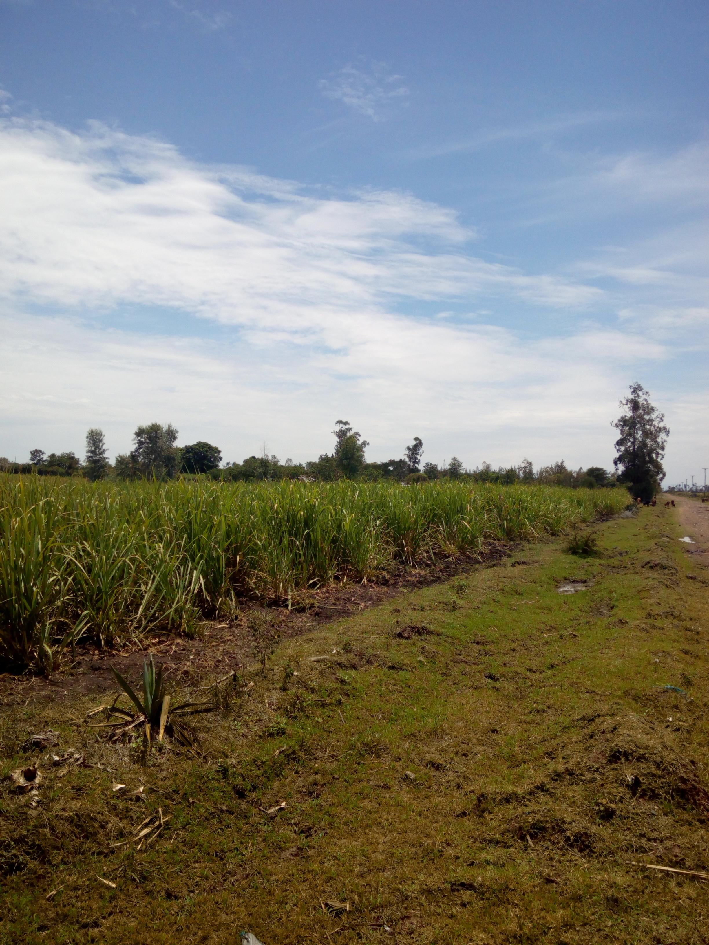 land for sale Awasi