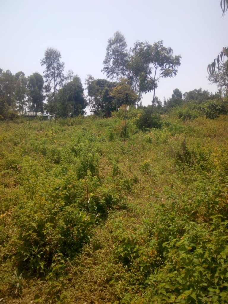 land for sale riat kisumu